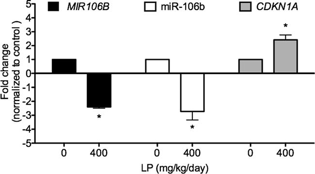 LP treatment significantly down-regulated MIR106B mRNA, miR-106b, and upregulated CDKN1A mRNA expressions in human lung tumor xenografts.