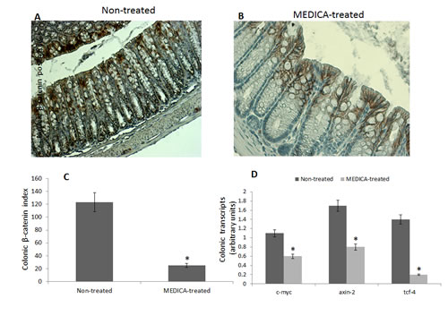 Effect of MEDICA on colonic β-catenin expression and β-catenin-responsive transcripts in diabetes-promoted CRC.
