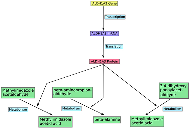 An example of modeling in the model MCPM.