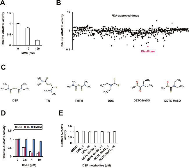 Inhibitory effects of DSF on ADAM10 in vitro.