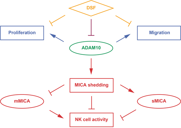 Therapeutic modes of DSF targeting ADAM10.