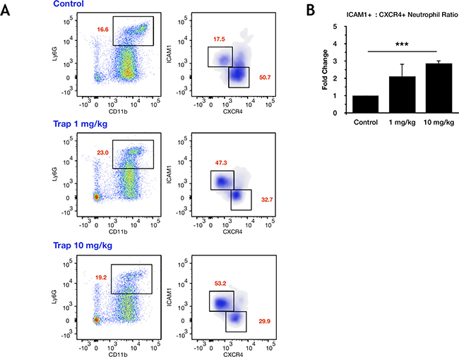Treatment with the IGF-TRAP reduces the proportion of N2-polarized tumor-infiltrating neutrophils in vivo.