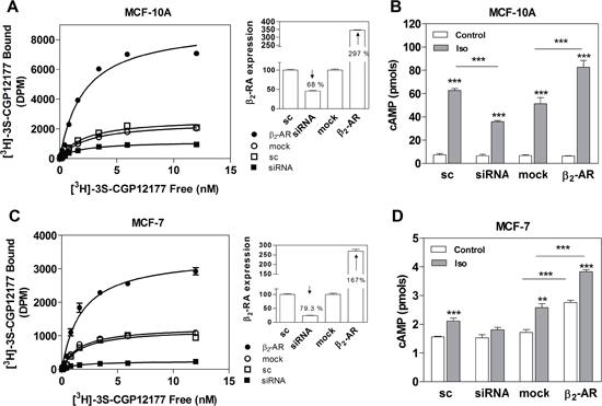 β2-AR overexpression and knock-down in MCF-10A and MCF-7 cells.