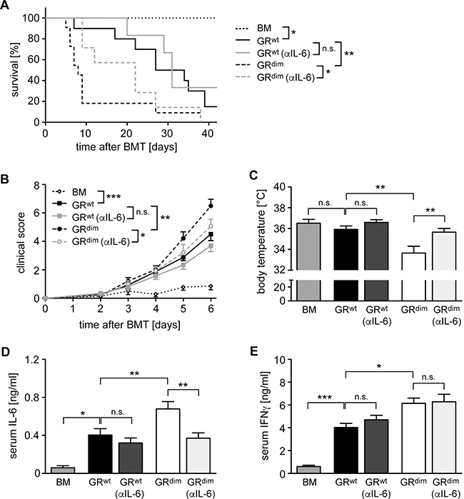 Impact of anti-IL-6 antibody treatment on mortality and clinical features of aGvHD in the GRdim model.