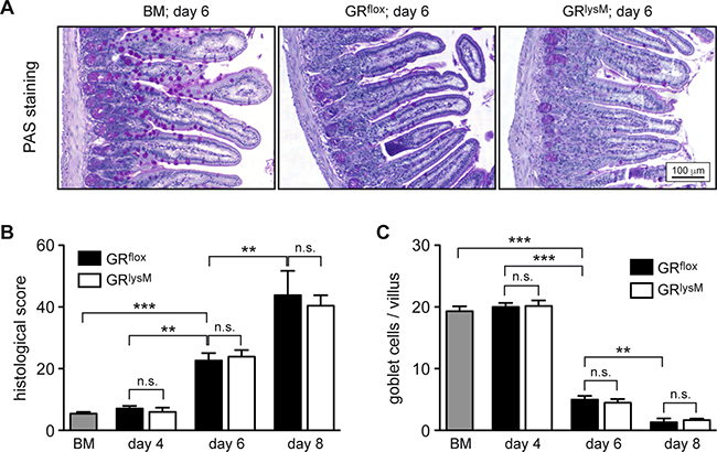 Histological assessment of the jejunum in the early phase of aGvHD in the GRlysM model.