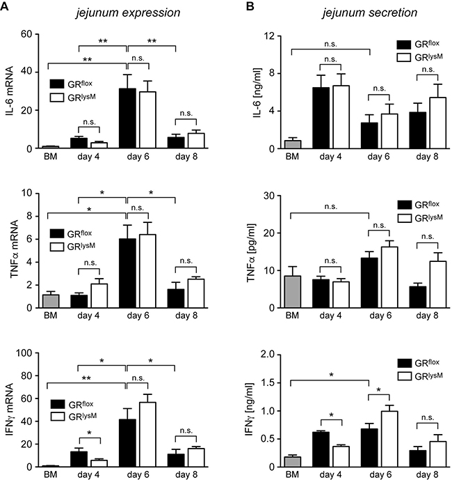 Cytokine expression and secretion in the jejunum in the early phase of aGvHD in the GRlysM model.