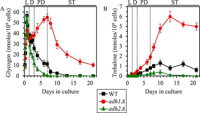 Effects of the adh1Δ and adh2Δ mutations on glycogen and trehalose concentrations in non-CR yeast.