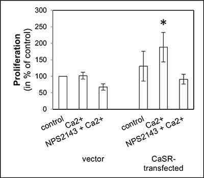 Cell proliferation of CaSR-transfected 786-O.
