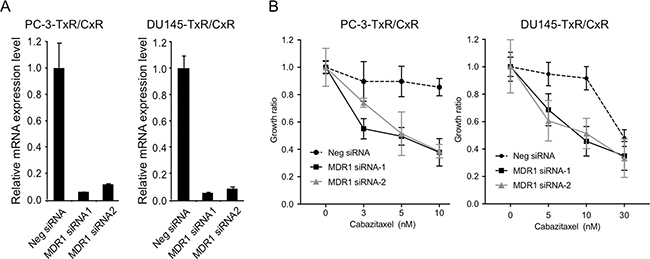 Recovery of cabazitaxel sensitivity by knockdown of MDR1.