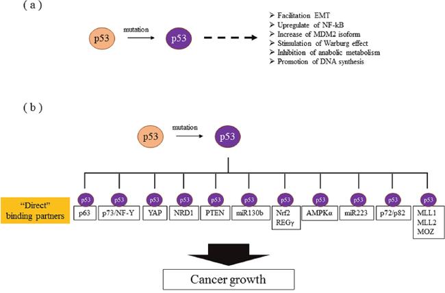 Molecular mechanisms of gain of function.