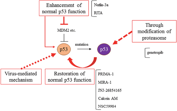 Mutant p53s targeted therapies.