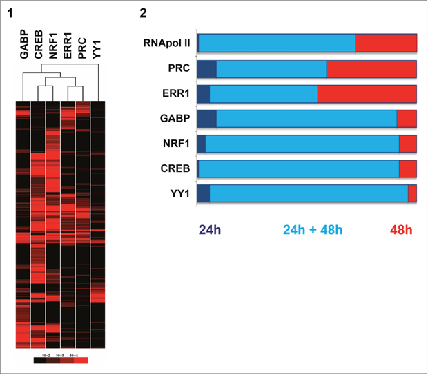 Comparison of gene-regulation of the five transcription factors (GABP, CREB, NRF1, ERR1, YY1) and the PRC coactivator in XTC.UC1 cells after serum induction through ChIP-chip analysis.