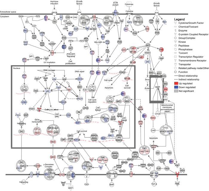 Regulation of 'Molecular mechanisms of cancer' canonical pathway in DFT1 cells by imiquimod.