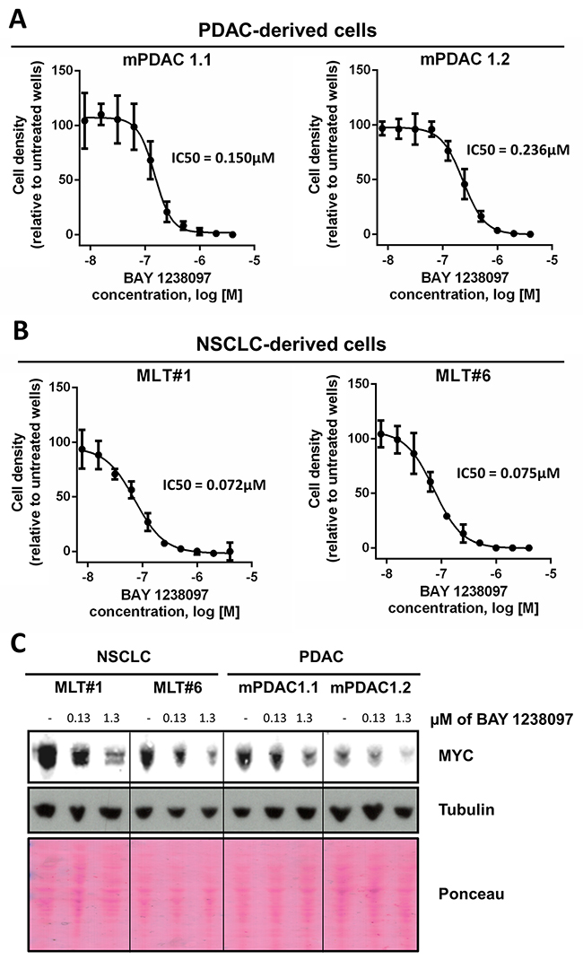 PDAC- and NSCLC-derived cell lines from the LSL-KrasG12D;Pdx1-Cre;p53ER/ER and LSL-KrasG12D;p53ER/ER genetic mouse models showed IC50s within the nanomolar range and a dose-dependent MYC decrease in response to BAY 1238097.