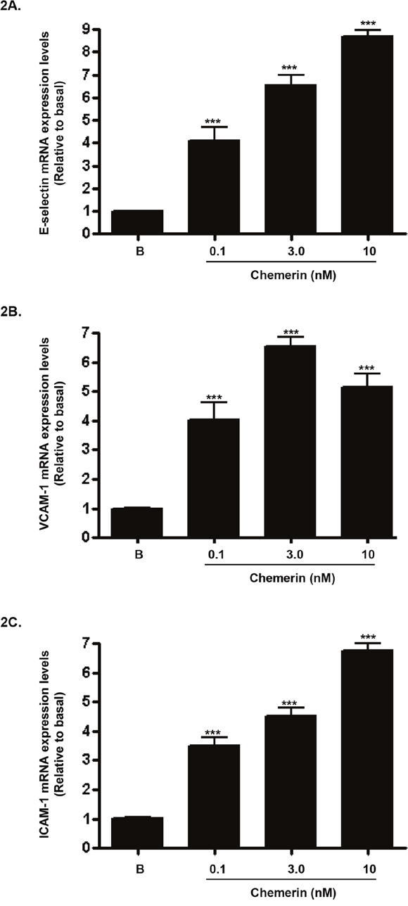 Chemerin increases endothelial cell adhesion molecules mRNA expression in HMEC-1 cells.