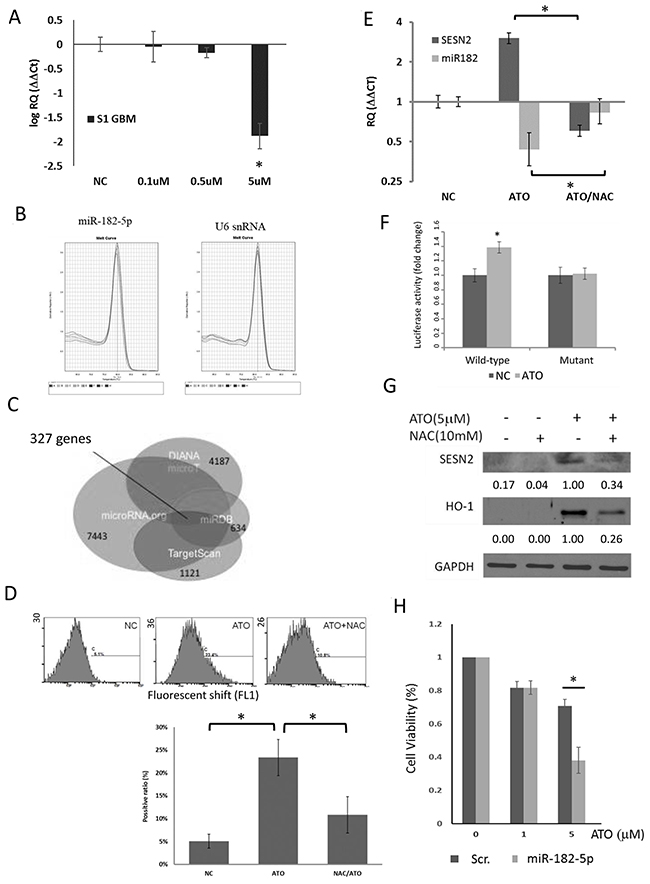 Effect of ATO on miR-182-5p expression in S1 GBM cells.