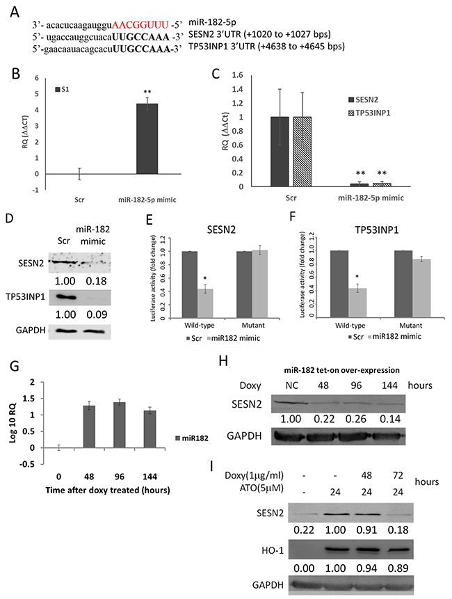 MiR-182-5p suppressed the expression of SESN2 and TP53INP1.