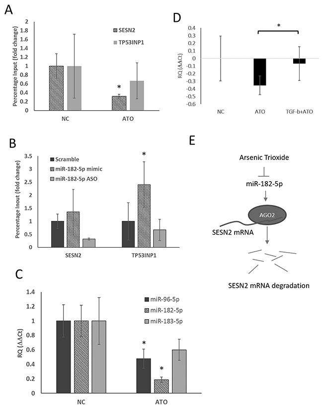 Suppression of miR-182-5p mediated binding of AGO2 to SESN2 mRNA following treatment with ATO.