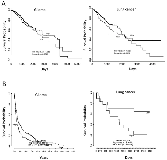 Association of miR-182-5p and SESN2 expression with overall survival using publicly available datasets.