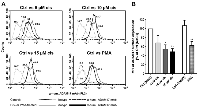 Modulation of ADAM17 on tumor cell surface after cisplatin treatment.
