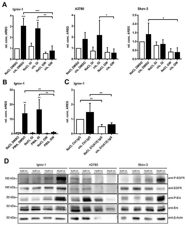 Cisplatin-induced AREG release is selectively ADAM17-dependent and cisplatin increases EGFR and ERK phosphorylation.