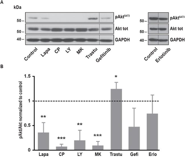 Effects of various inhibitors on Akt phosphorylation.
