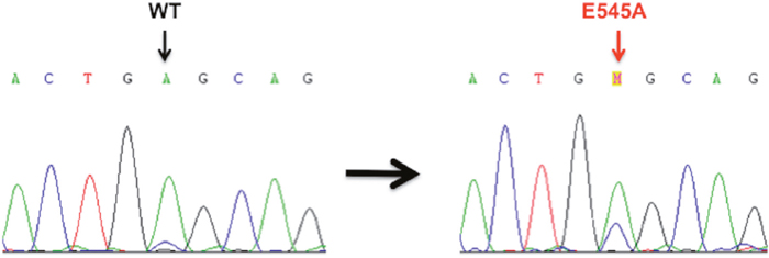 Sanger sequencing electropherograms of Wild-Type (WT) and mutant PIK3CA in the primary PSCC cases.