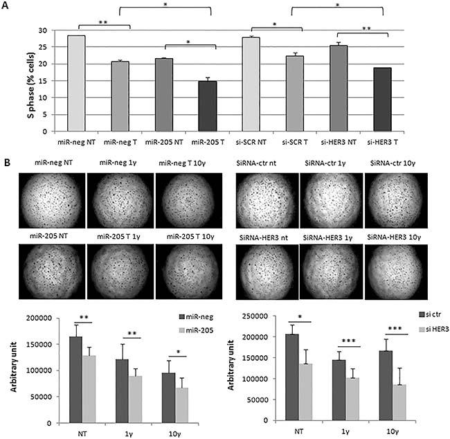 MiR-205 improves responsiveness to Trastuzumab.