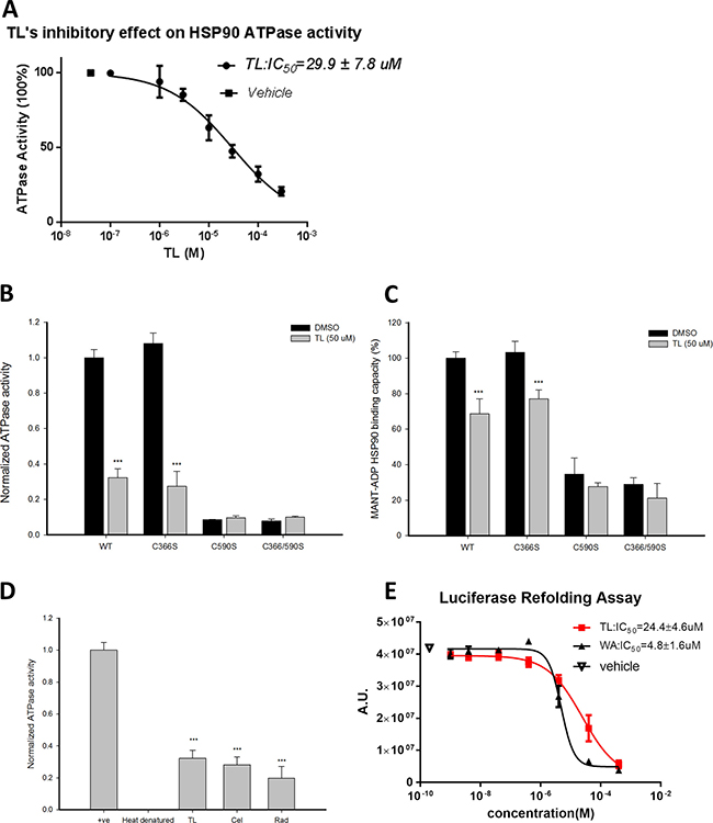 Triptolide inhibits ATPase activity of HSP90β and disrupts its chaperone activity.