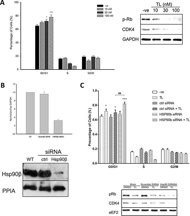 Triptolide arrests HeLa cell cycle through HSP90β.
