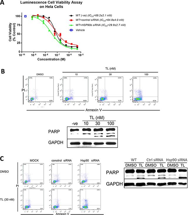 Triptolide triggers programmed cell death through HSP90β.