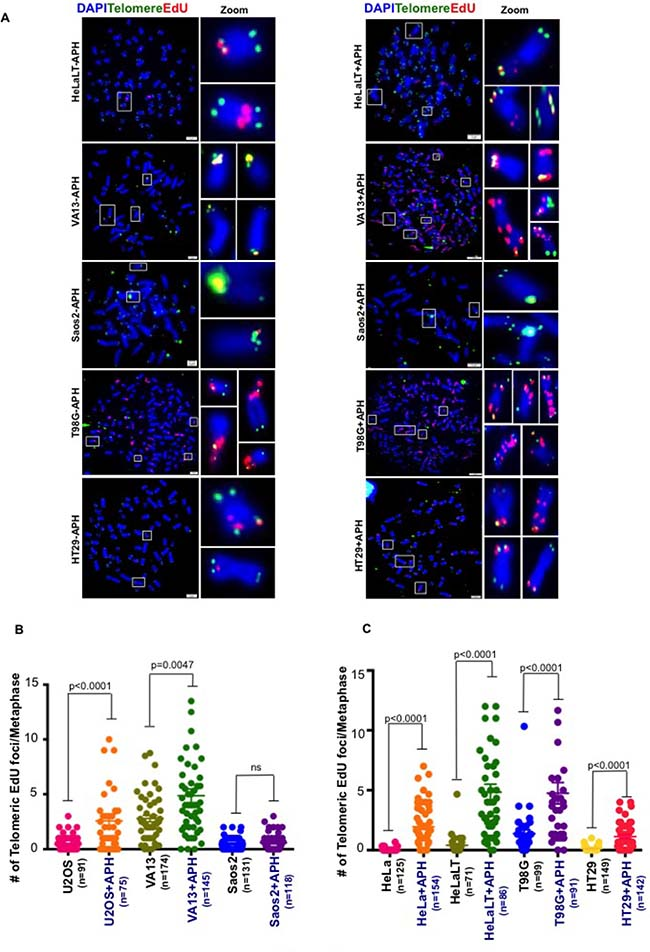 Spontaneous MiDAS at telomeres is not limited to ALT-associated telomeres.