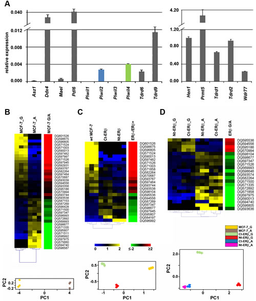 Expression of mRNAs encoding key components of the Piwi/piRNA pathway in MCF-7 cells and modulation of piRNA expression by cell growth and presence of Estrogen Receptor β.
