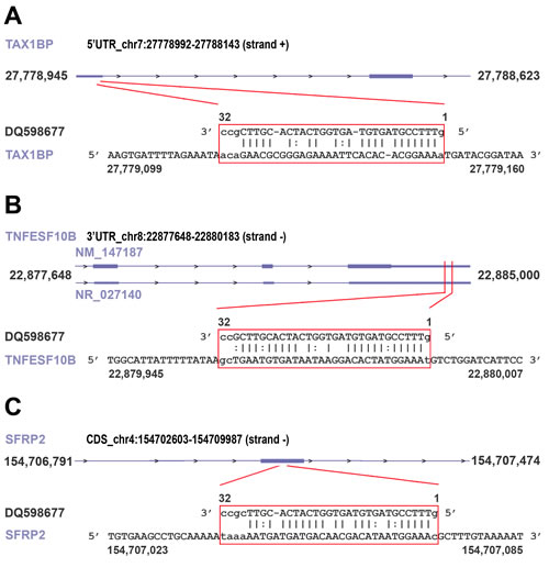 Examples of piRNA-RNA sequence complementarity exploited to identify transcripts representing putative targets of the piRNAs found differently expressed in cancer vs normal breast tissue.