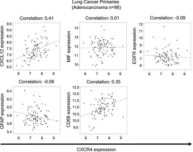 Correlation studies on lung cancer primaries.