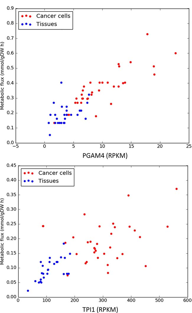 Expression levels and predicted metabolic fluxes (expressed in milimoles per hour and gram of cell biomass) for PGAM4 (phosphoglycerate mutase) and TPI1 (triosephosphate isomerase).