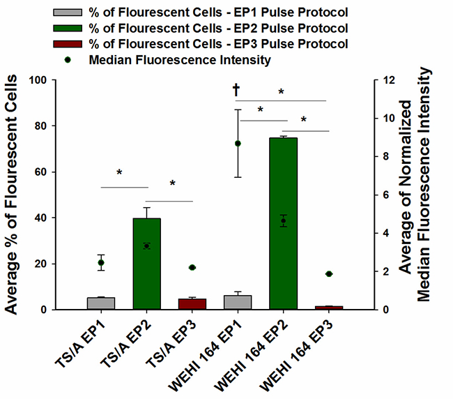 Transfection efficiency of TS/A and WEHI 164 cell lines after pEGFP-N1 electrotransfer using three different pulse protocols of DNA electrotransfer.