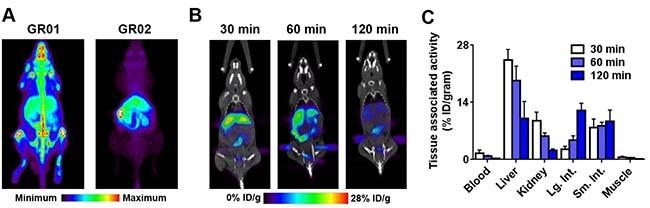 In vivo biodistribution of 18F-GR01 and 18F-GR02 in tumor naïve, intact male C57BL6/J mice.