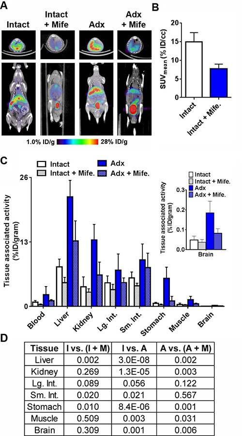 Evidence for the GR specific accumulation of 18F-GR02 in tumor naïve C57BL6/J mice.
