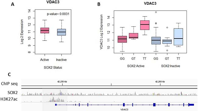 SOX2 regulates VDAC3 expression.