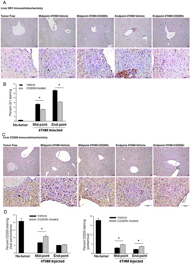 Changes in Gr1+ and CD200+ cells within liver tissue following CD200fc Treatment.