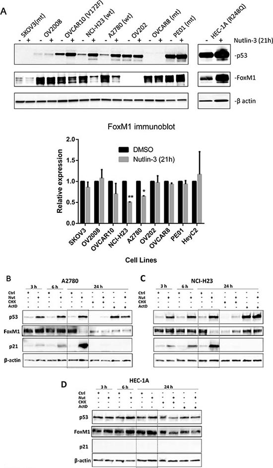 Functional p53 is required for FoxM1 suppression by Nutlin-3.