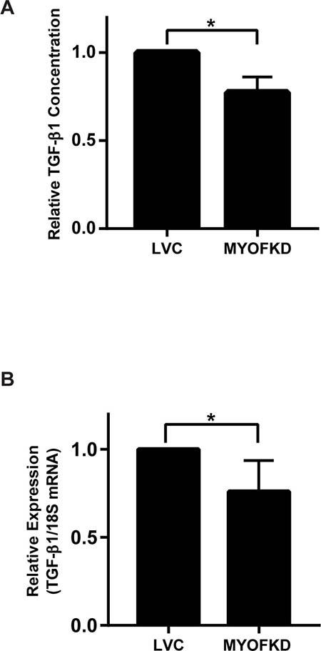 Effect of myoferlin depletion on TGF-β1 expression.
