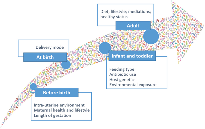 Microbiota dynamics and complexity from birth to adult.