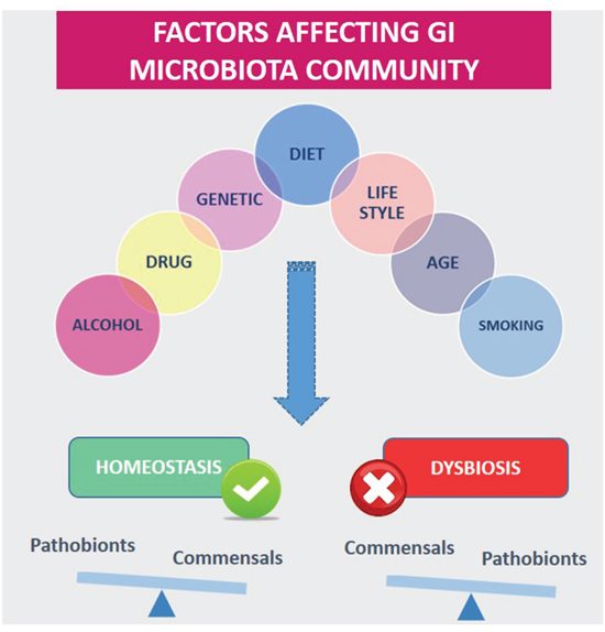 Diet and other environmental factors influence gastrointestinal Microbiota (GI) homeostasis or dysbiosis.