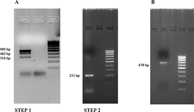 Overlapping PCR results (2% agarose gel).