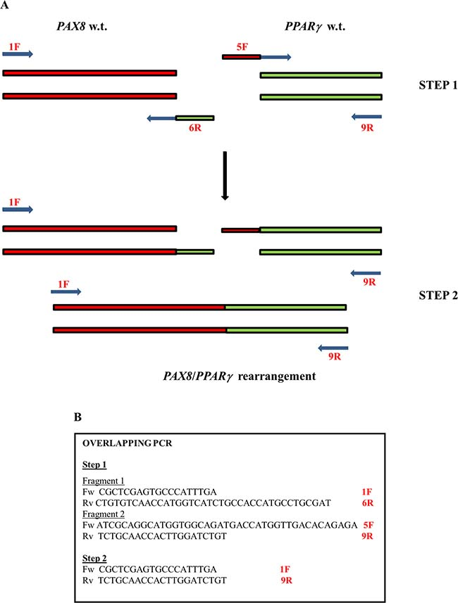 The plan of overlapping PCR.