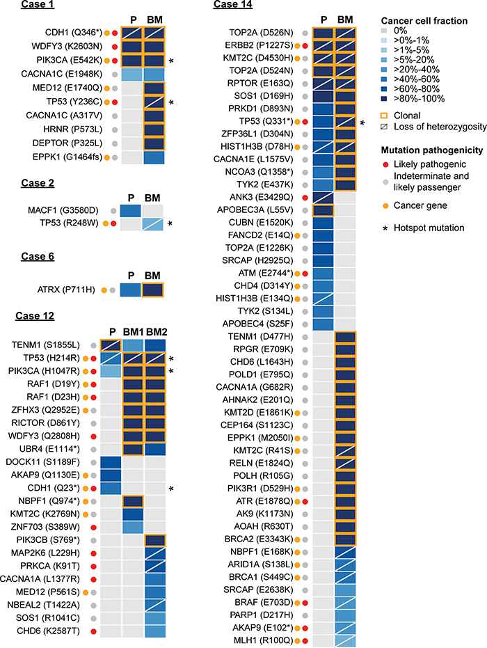 The repertoire of somatic genetic alterations in primary breast cancers and their respective brain metastases.