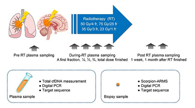 Schematic representation of the experimental strategy to analyze plasma cfDNA levels in NSCLC patients in response to radiotherapy.