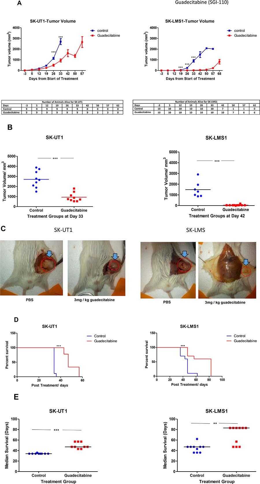 Decrease in tumor volume with Guadecitabine in xenograft model.